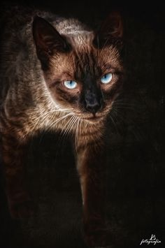 Felino by Manuel Lancha, via 500px