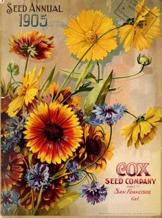 Seed Annual 1905