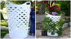 Image result for strawberries in hanging baskets