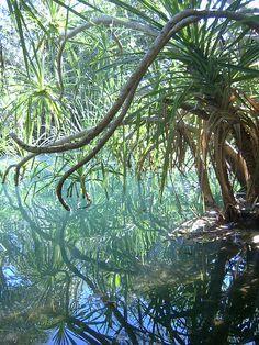 Berry Springs near Darwin, Northern Territory, Australia (by katehatehotmail).