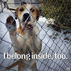 IMPORTANT: Many parts of the country are reaching well below freezing temps! PLEASE bring your animals inside! Please share!
