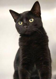 Heroes Wiki, Bellisima, Ideias Fashion, Cats, Animals, Gatos, Kitty Cats, Animaux, Animal