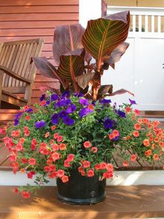 "Creating a high-impact container involves a dramatic vertical element (often called the ""thriller""), a plant that will fill out the middle section (the ""filler"") and a plant that will tumble over the sides (the ""spiller""). In this photo: canna, petunia (Supertunia) and a calibrachoa (Superbell)."