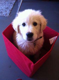 Dog in a box...