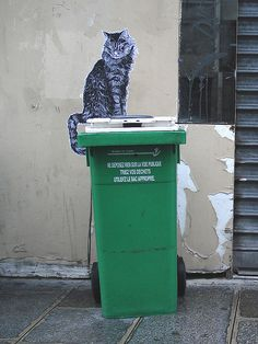 cat in street !!street art cat 000