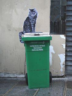 By surianii, Paris  This cat gets around - Same cat in window frame!