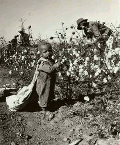 """dmc-dmc: """" blackinamerica: """" cleophatracominatya: """" silentnefertiti: """" thechubbygardevoir: """" darvinasafo: """" America was never great. """" I never know they had TODDLERS picking cotton holy shit """" Who are..."""