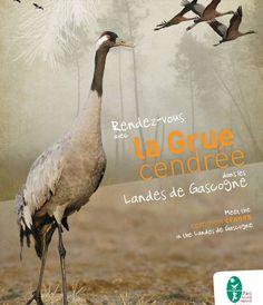 Agenda : nombreux rendez-vous avec les Grues cendrées dans les Landes de Gascogne (Aquitaine)    Entre novembre et janvier, participez aux visites guidées et aux séjours de découverte organisés dans plusieurs secteurs du parc régional des Landes de Gascogne (Aquitaine) où il est possible d'observer la Grue cendrée en migration et en hivernage : réserves d'Arjuzanx et de l'étang de Cousseau, Captieux,...  #oiseaux #ornithologie