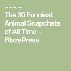 Screen Shot At AM Funny Pinterest Screen - The 30 funniest animal snapchats of all time