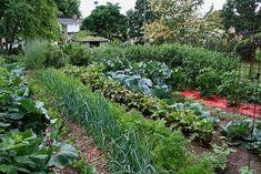 Free Vegetable Garden Layout, Plans and Planting Guides - garten-ideen