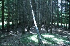 #parconaturale #prealpigiulie #friuliveneziagiulia #montagne #mountains #natura #nature #italy #canon #fotografia #photography #photoshop #focus #alberi #tree #flora #forest #foresta #fantasy #luce #light