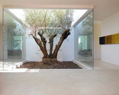 Enclosed courtyard - Living with the outside from the inside
