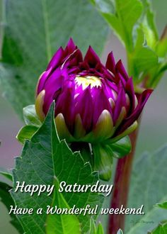 Morning Messages, Happy Saturday, Good Morning Quotes, Corporate Gifts, Good Day, Plants, Buen Dia, Good Morning, Hapy Day