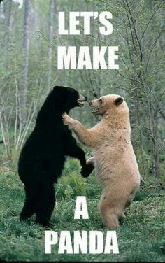 Let's make a panda. Picture Quotes.
