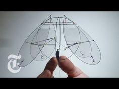 Flying Jellyfish | ScienceTake w/ James Gorman | The New York Times - YouTube