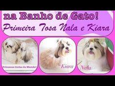 Vlog | Primeira Tosa BB de Nala e Kiara na Banho de Gato! ♥ - YouTube
