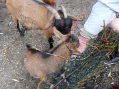 © Nicola Dülk Parks, Goats, Fish, Animals, Make A Donation, Animales, Animaux, Pisces, Animal