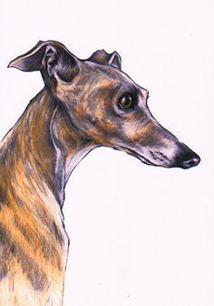 Italian greyhound art print Iggy art images by JimGriffithsArt