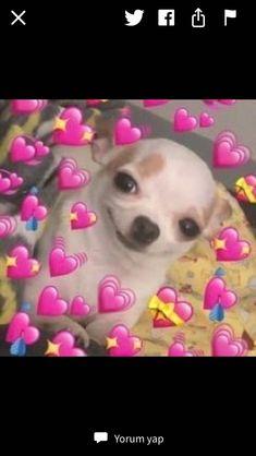 New memes heart emoji ideas - Modern New Memes, Dankest Memes, Funny Memes, Baby Memes, Meme Meme, Animal Memes, Funny Animals, Cute Animals, Memes Amor