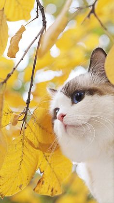 Cat Care - The Proper Ways to Make a Difference in Their Lives I Love Cats, Crazy Cats, Cute Cats, Funny Cats, Animals And Pets, Baby Animals, Cute Animals, Pretty Cats, Beautiful Cats