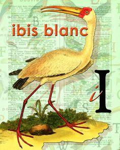 I for IBIS.Alphabet Ornithology art Decor par BerniesArtPrints