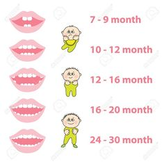 Dentaltown - Baby Teeth Eruption Chart #pediatricdentistry #portlandpediatricdentist #greenburgpediatricdentistry http://www.greenburgpediatricdentistry