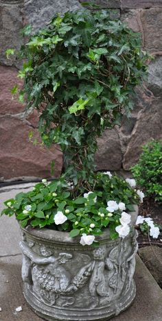 Love English Ivy!! I enjoy growing this inside and out!!