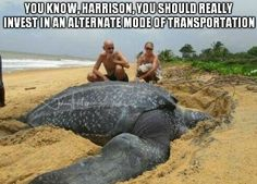 Funny pictures about Giant Leatherback sea turtle. Oh, and cool pics about Giant Leatherback sea turtle. Also, Giant Leatherback sea turtle. Giant Sea Turtle, Turtle Love, Sea Turtles, Turtle Baby, Leatherback Turtle, Funny Animals, Cute Animals, Large Animals, Giant Animals