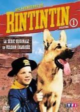 Rintintin (1954–1959)