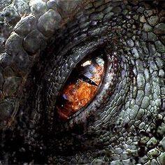Digital Painting Inspiration Vol. Dark Fantasy Art, High Fantasy, Hobbit, Jurassic Park Poster, Blue Jurassic World, Indominus Rex, Yennefer Of Vengerberg, Creepy Pictures, Dragon Eye