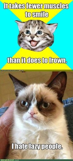Grumpy cat lazy smile frown