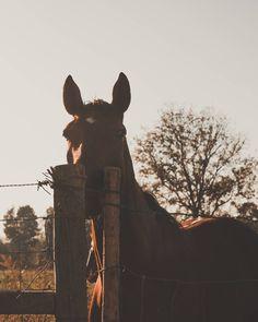 Cavalo Fotogénico(2) . . . . . #portugaldenorteasul #portugal_de_sonho #igersportugal #wu_portugal #p3top #super_portugal #portugalcomefeitos #topportugalphoto #ig_today #gerador #streetphotography #sunset  #visual_square #shooters_pt #landscape #vscofilm #huntgramportugal #topportugalphoto #minimal #gameoftones #minimallandscape #horse #animal  #sonya6000 #sonyphotography #igersportugal #vscopt #igmaster #bomregisto #15aoburro