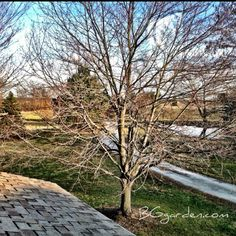 It's gonna be fun to watch this maple change in the next few days w/ warm weather in forecast.