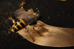 Bee, Plexi, brass. 2011.Jasmina Tsvetkova Plexus Products, Insects, Bee, Brass, Jewelry, Jewlery, Jewels, Bees, Jewerly