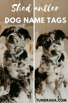 Tundrada offers rustic name tags for outdoorsy pups, they are made of shed reindeer antler and are coated with resin to protect and mask the yummy antler smell. Get your custom tag by visiting the website. Dog Antlers, Shed Antlers, Reindeer Antlers, Dog Name Tags, Dog Id Tags, Custom Tags, Aussies, Cool Names, Four Legged