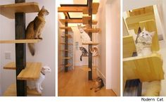 The cats took over long ago, there is no human furniture left anymore. #cattrees - Make your cat happy - Catsincare.com!