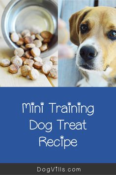 Looking for the perfect homemade mini training dog treats recipe?Youre going to love this super simple idea!It only has three ingredients and all of them are right in your grocery store.Read on to learn how to make it! Dog Treat Recipes, Dog Food Recipes, Wellness Tips, Health And Wellness, Peanut Butter For Dogs, Dog Health Tips, Dog Nutrition, Best Dog Food, Homemade Dog Treats