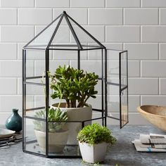 Glass Greenhouse Terrarium- perfect for those with pesky curious cats.