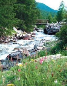 le torrent s'apaise, près des fleurs sauvages...  Parc National du Mercantour  Estenc (l'autre Provence)