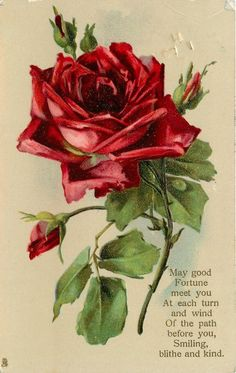 Dark red rose & buds.  Poem:  May good fortune meet you at each turn, and wind of the path before you... Smiling, blithe and kind.