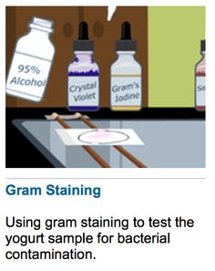 Virtual Lab on Gram Staining.  Awesome!!