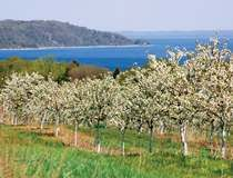 """Looks like a fun spring #boomer trip: """"Old Mission Peninsula Blossoms with a view of East Grand Traverse Bay""""  #travel #Michigan"""