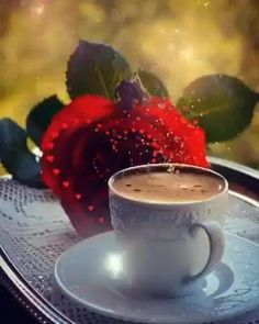 good morning roses images gif ~ good morning roses images , good morning roses images for her , good morning roses images gif , good morning roses images love