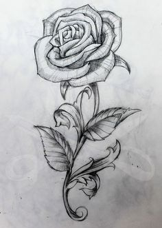 Rose and Stem