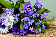 Madelief: Garden blues