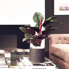 Factory Direct Craft Vinyl Maidenhair Fern Garland for Indoor or Outdoor Decor