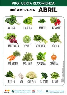 Discover recipes, home ideas, style inspiration and other ideas to try. Eco Garden, Fruit Garden, Terrace Garden, Garden Plants, Garden Ideas, Green Life, Go Green, Small Vegetable Gardens, Vegetable Pizza