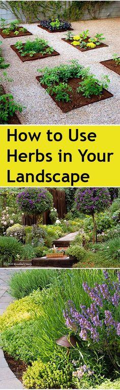Cómo utilizar las hierbas en su diseño de paisaje - How to Use Herbs in Your Landscape