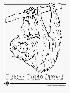 Endangered Animals Coloring Pages. 20 Endangered Animals Coloring Pages. Endangered Animals Coloring Pages Animals From north Rainforest Crafts, Rainforest Birds, Rainforest Theme, Amazon Rainforest, Rainforest Preschool, Preschool Jungle, Preschool Themes, Coloring Pages To Print, Printable Coloring Pages