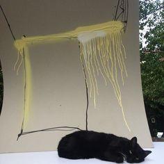 Cats & Art #19west #cat #cute #black #art #streetart #graffiti #graffitiart